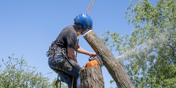 Benefits for Hiring an Arborist for 2021 Commercial Projects